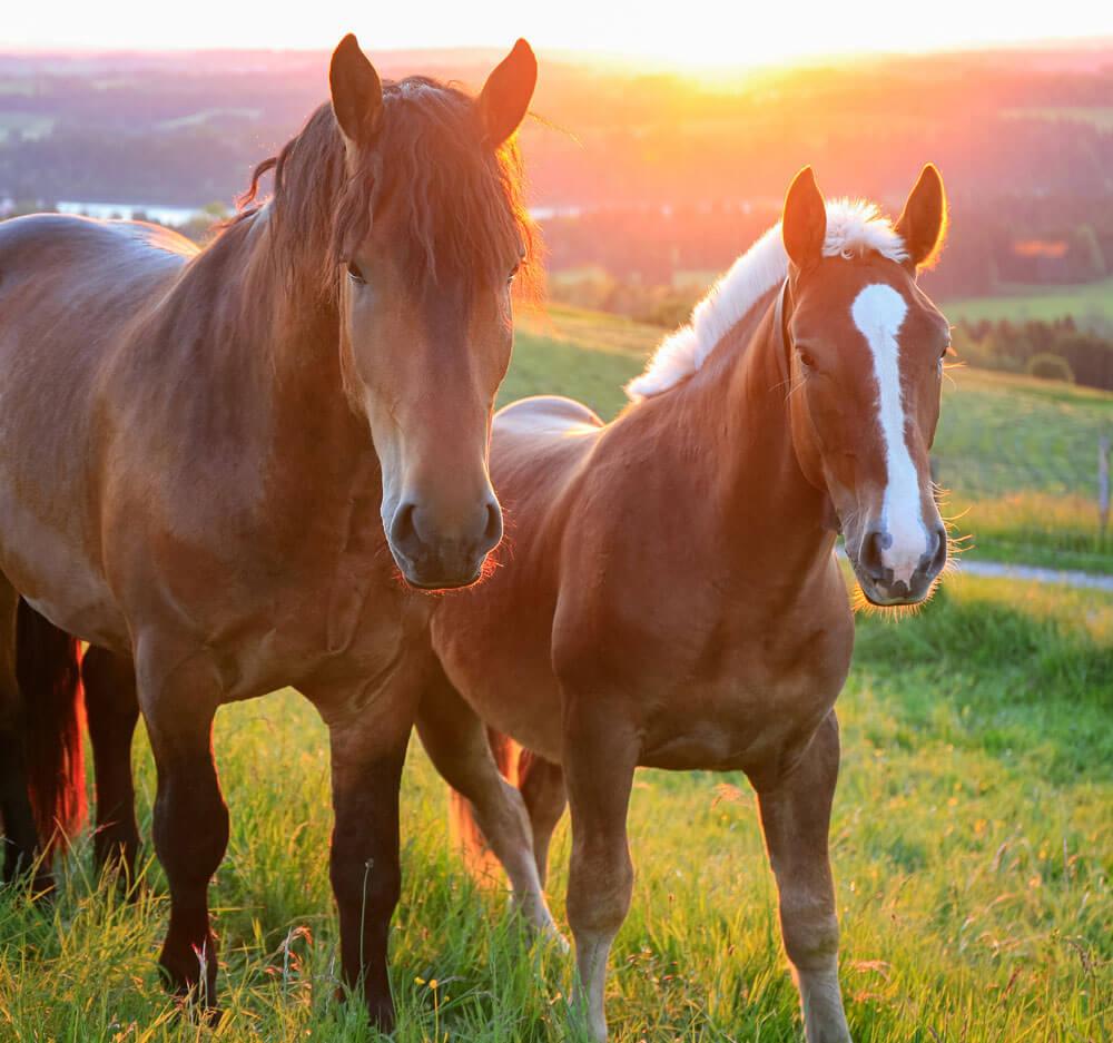 koenigshofer-pferdefutter